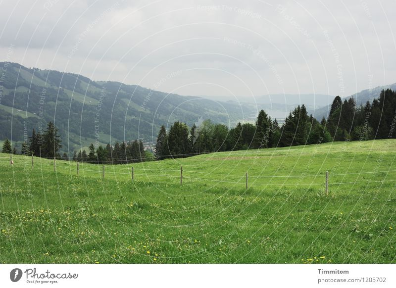 Somewhere in the Allgäu (2) Vacation & Travel Environment Nature Landscape Plant Sky Clouds Weather Tree Grass Hill Fence Wooden stake Esthetic Fresh Gray Green