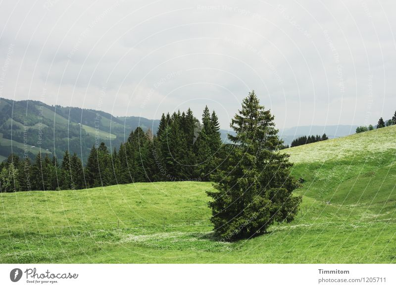 Somewhere in the Allgäu. Vacation & Travel Mountain Environment Nature Landscape Plant Sky Tree Forest Hill Looking Esthetic Natural Gray Green Emotions