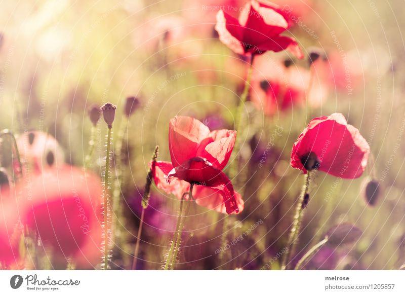 Nature Plant Beautiful Green Summer Flower Red Yellow Blossom Style Park Dream Illuminate Elegant Gold Happiness