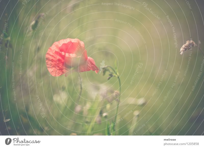 Nature City Beautiful Green Summer Relaxation Flower Loneliness Red Blossom Emotions Meadow Grass Style Dream Design
