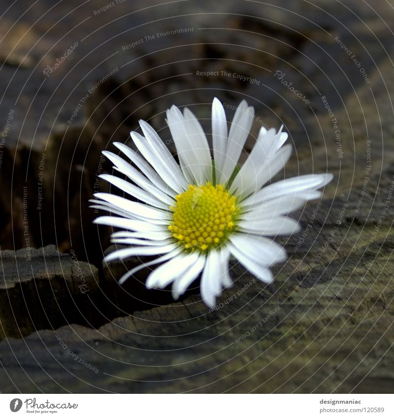 Nature White Sun Flower Winter Black Loneliness Yellow Cold Dark Movement Blossom Wood Sadness Warmth Brown