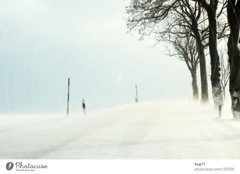 White Beautiful Tree Joy Winter Black Forest Street Cold Graffiti Snow Moody Wind Field Transport Speed