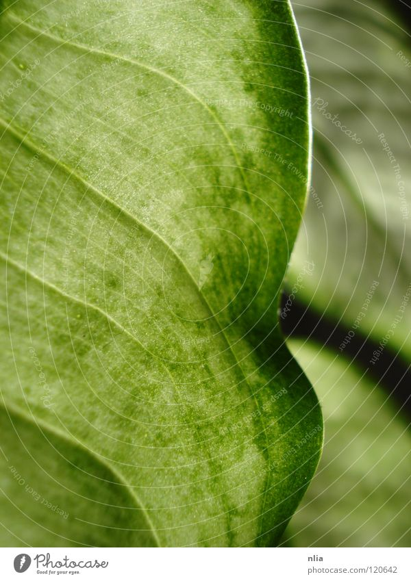 Green Leaves Leaf Plant Harmonious Bushes Nature