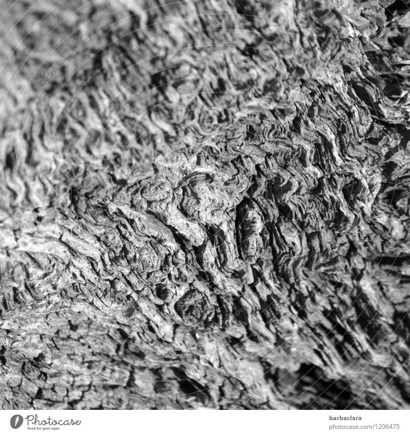 perm waves Nature Tree Root of a tree Wood Line Old Dark Bright Wild Gray Bizarre Climate Environment Transience Change Black & white photo Exterior shot Detail