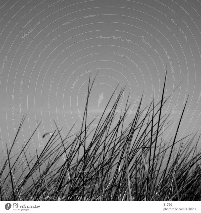 Sky Ocean Beach Grass Observe Beach dune Dragon Symbols and metaphors