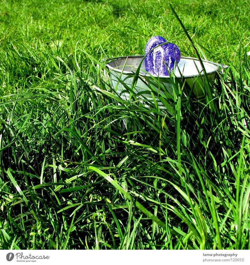 Green Joy Meadow Grass Spring Infancy Fresh Search Ear Lawn Easter Hide Hare & Rabbit & Bunny Chocolate Blade of grass Vessel