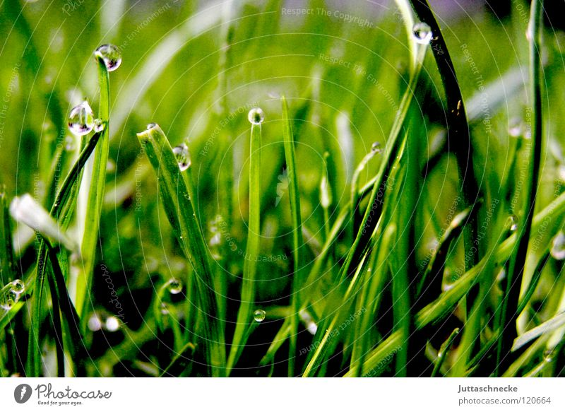 Green Grass Drops of water Floor covering Lawn Peace Under Blade of grass Dew Juicy Gardening equipment Lawnmower Plant Grass green
