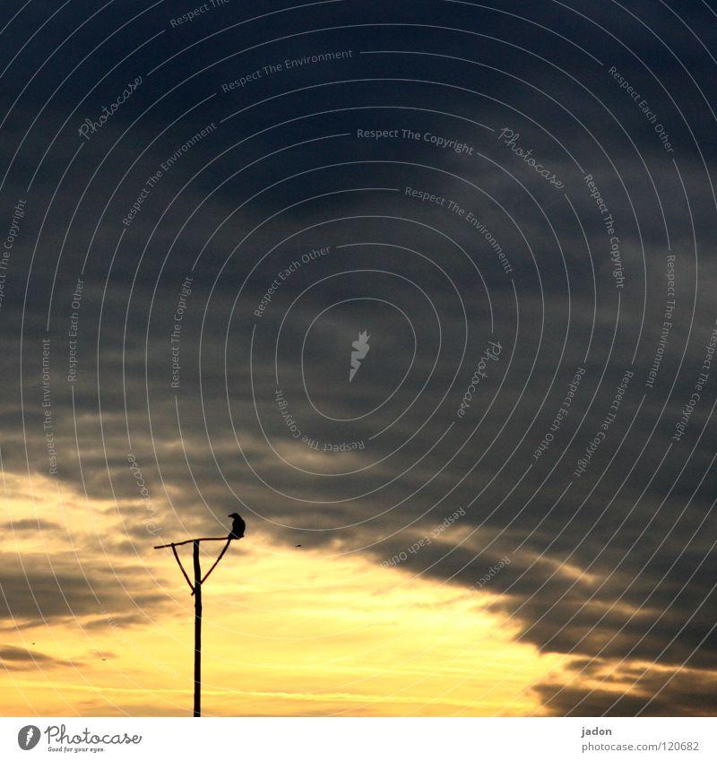 Sky Black Dark Death Bird Crazy End Transience Gate Goodbye Hell Pole Paradise 7 Rod Soul