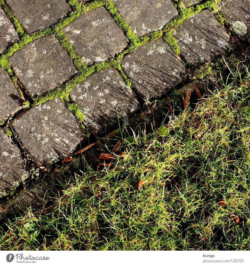 Square is always Meadow Grass Pave Growth Diagonal Green Furrow Garden Park Lawn Cobblestones Farm Stone Nature Structures and shapes Seam