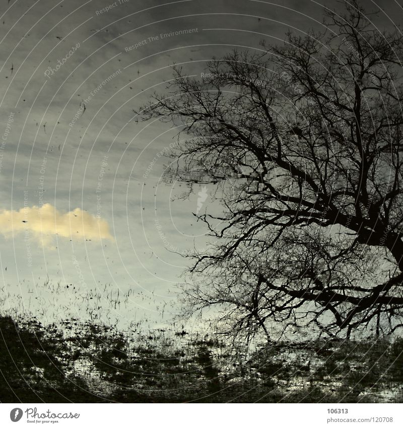 Sky Nature Water Green Tree Loneliness Clouds House (Residential Structure) Forest Relaxation Far-off places Environment Meadow Emotions Freedom Coast