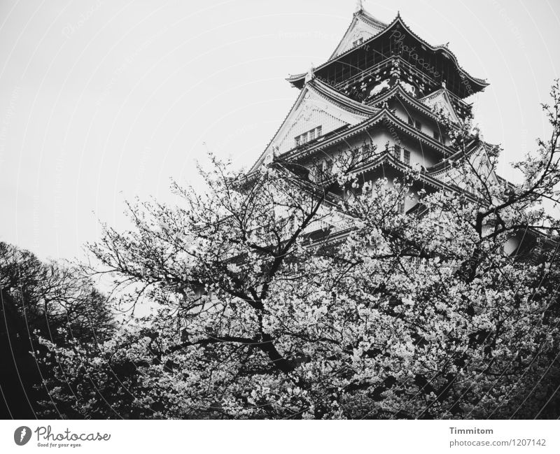 Osaka-jo Castle Vacation & Travel Environment Sky Spring Bad weather Tree Japan Osaka-jo castle Esthetic Gray Black Emotions Culture Sublime Architecture
