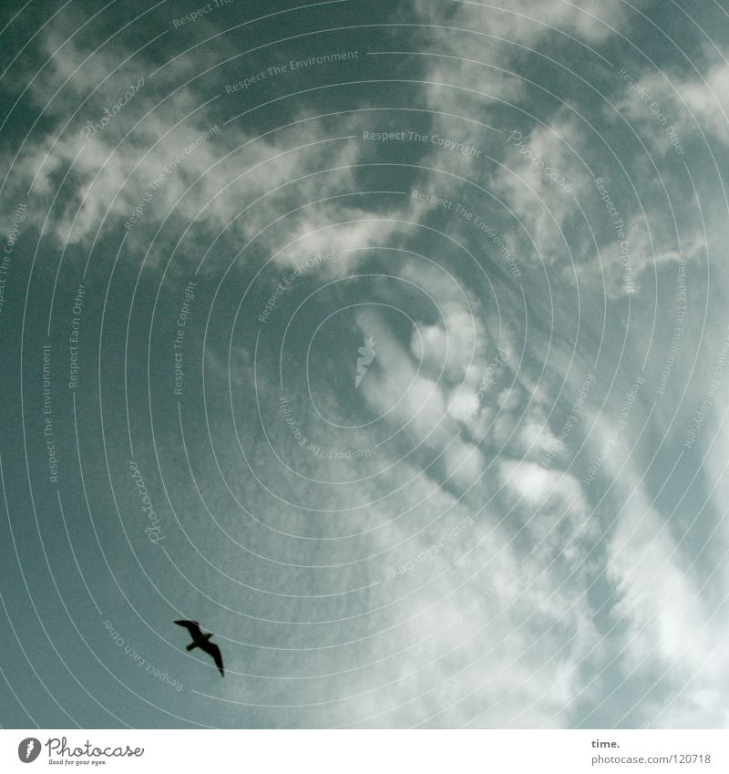 Sky Beautiful Clouds Far-off places Freedom Dream Bird Flying Infinity To enjoy Hover Circle