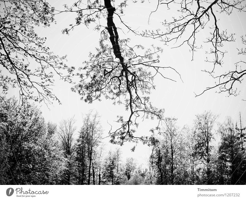 in the woods. Trip Environment Nature Plant Sky Forest Esthetic Simple Natural Gray Black Emotions Size Impressive Black & white photo Exterior shot Deserted