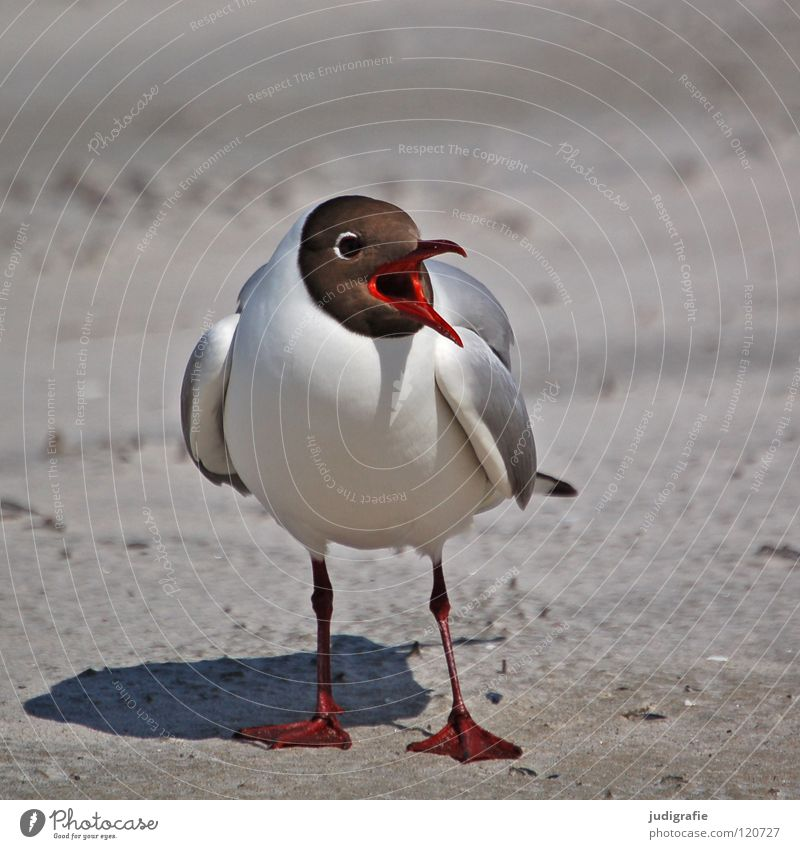Nature Ocean Summer Beach Vacation & Travel Animal Colour Lake Sand Legs Bird Coast Environment Flying Threat Feather