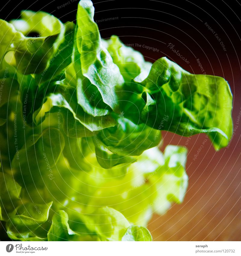 Fresh Salad Green Plant Healthy Eating Dish Background picture Food Food photograph Vegetable Delicious Vitamin Sense of taste Lettuce Leaf green