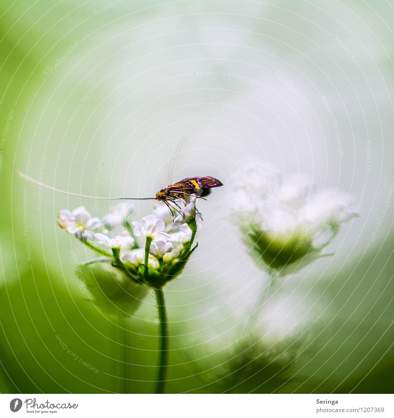 What a view Environment Nature Plant Animal Sun Sunlight Spring Summer Flower Blossom Foliage plant Agricultural crop Butterfly 1 Flying Colour photo