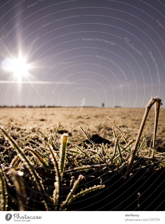 Sky Sun Blue Ice Orange Field Horizon Blade of grass Crystal structure Lens flare