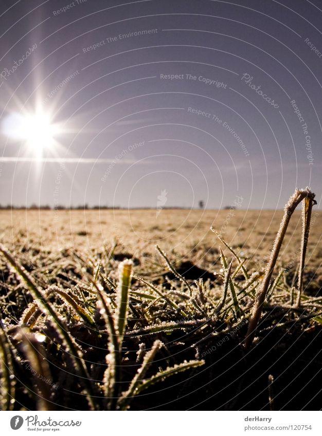 Sky Sun Blue Ice Orange Field Horizon Blade of grass Crystal structure Lens flare