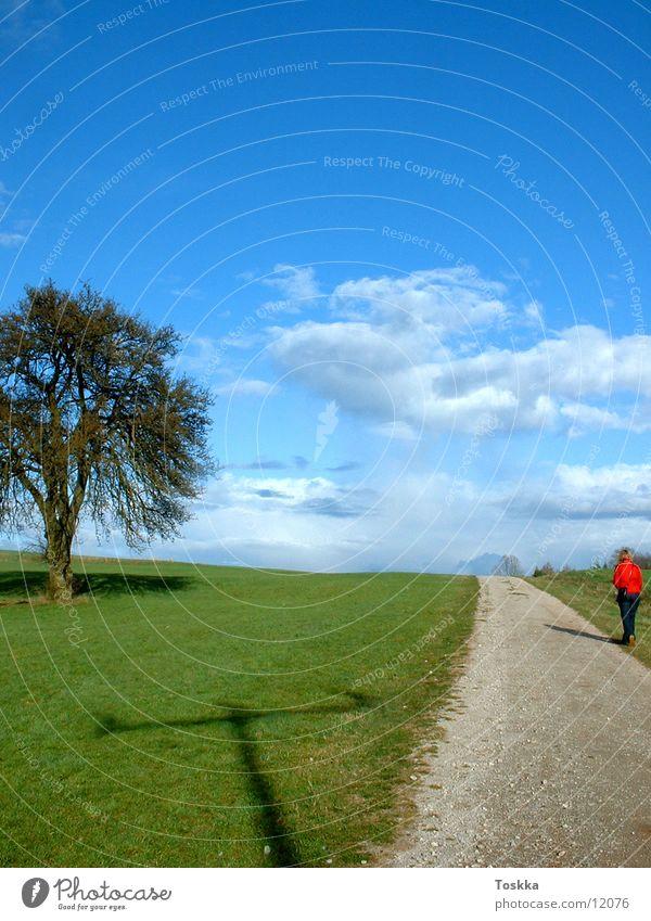 Tree Sun Green Blue Clouds Street Spring Lanes & trails Gravel Sky blue Stone