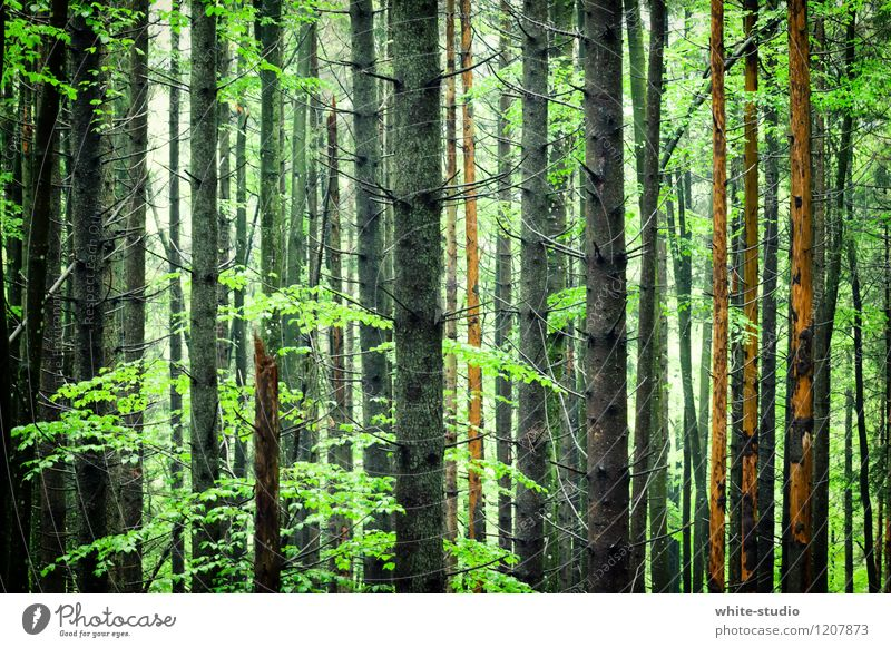Nature Plant Green Tree Relaxation Forest Environment Park To go for a walk Tree trunk Treetop Mystic Tree felling Enchanted forest Work and employment