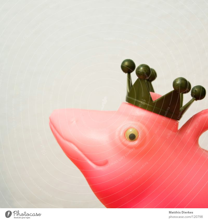 King Zett Frog Prince Watering can White Pink Red Fairy tale Animal Things Good mood Exhibition Interesting Exciting Living or residing Obscure king crown