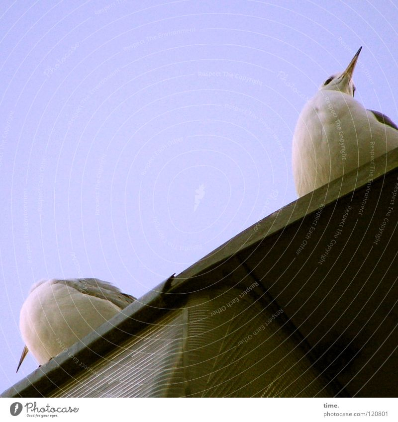 Lamp Bird Sit Communicate Concentrate Lantern Seagull Beak Aim Frustration