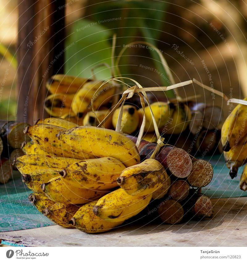 elephant food Banana Sugarcane Feed Bundle Bast Wood Yellow Brown Grass Elephant Asia Thailand Chiangmai Decoration Healthy Bow Fruit Nutrition sugar Blue