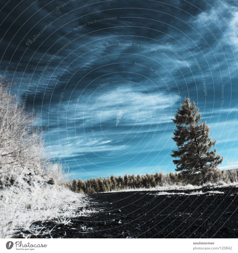 Sky Nature Blue White Tree Clouds Loneliness Black Forest Lanes & trails Bushes Surrealism Gravel Vail Infrared Railroad