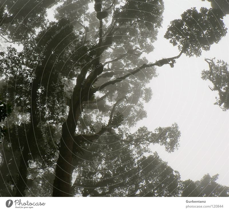 Tree Leaf Forest Virgin forest Tree trunk Treetop Borneo