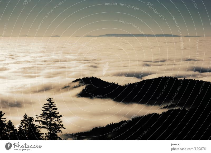 mudflat Tree Relaxation Far-off places Wanderlust Black Forest Hill Landscape Fog Fir tree Above the clouds Vacation & Travel Vantage point Clouds Cloud cover