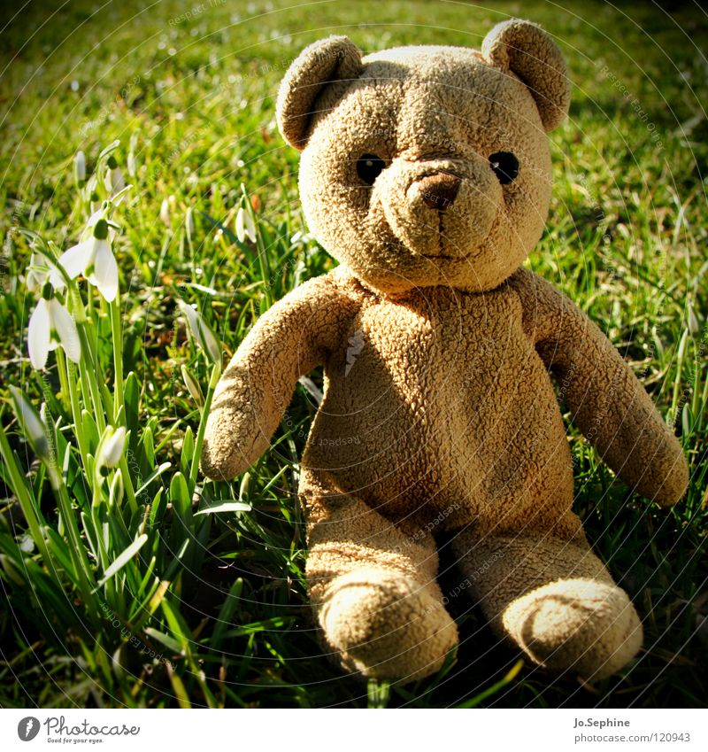 Blund discovers spring teddy Teddy bear Cuddly toy cuddly toy Toys Snowdrop Spring day Spring fever Spring flowering plant Sunlight Beautiful weather Joy Garden