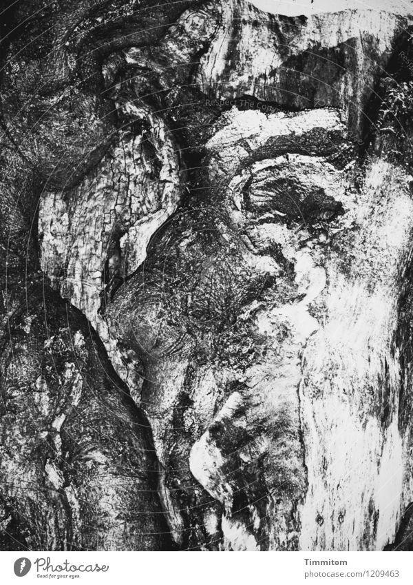 Nature Plant White Tree Dark Black Environment Emotions Wood Gray Line Art Dream Esthetic Threat Apocalyptic sentiment