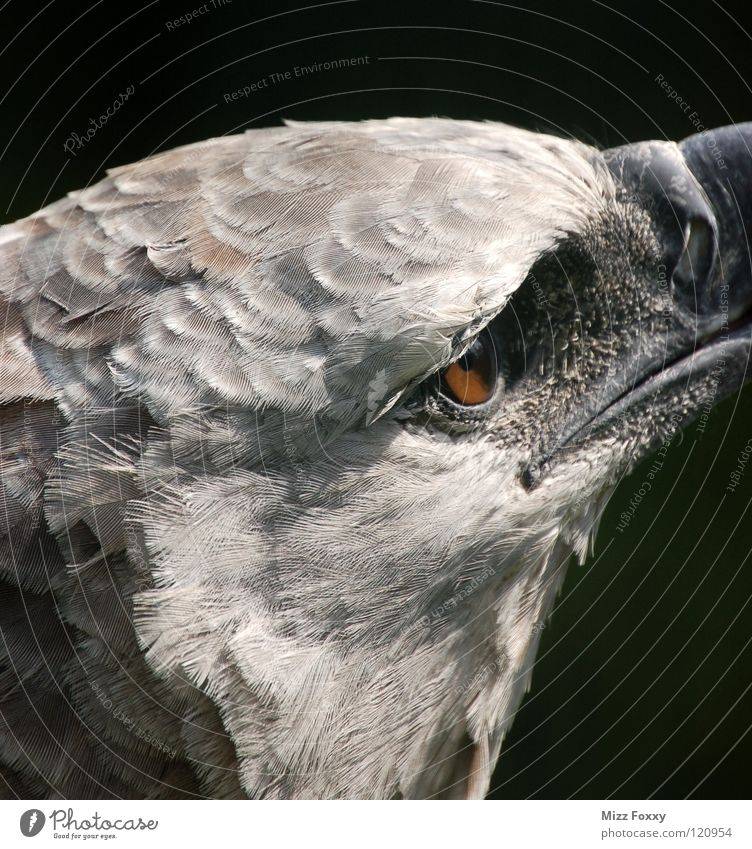 Nature Eyes Animal Gray Bird Zoo Aggression Graceful Eagle Bird of prey
