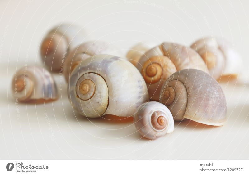 slug housing estate Nature Animal Snail Group of animals Brown Snail shell Many Decoration Still Life Mussel Colour photo Subdued colour Interior shot