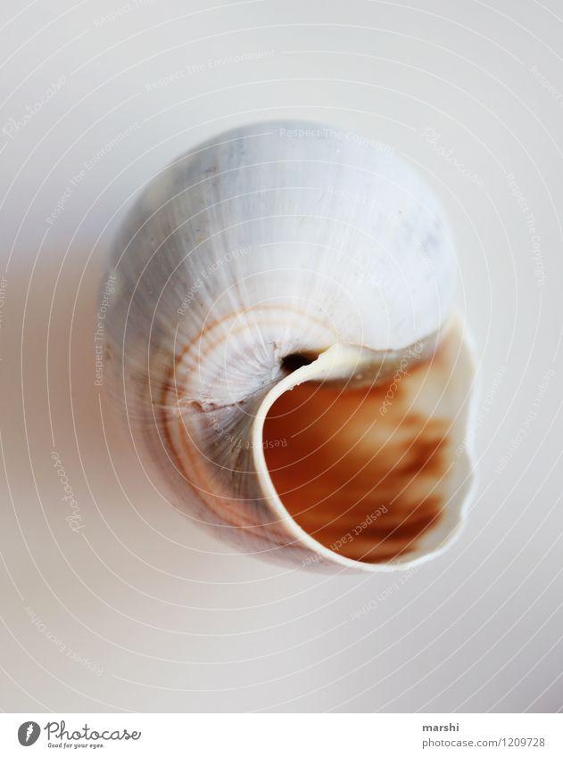 Nature Animal Brown Still Life Snail Snail shell