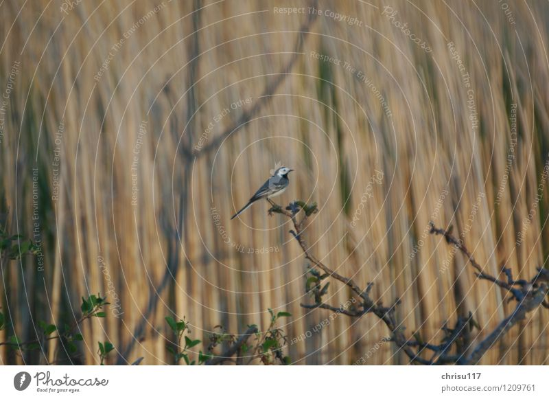 Nature Animal Spring Bird Wild animal Observe Lakeside Pond Wagtail