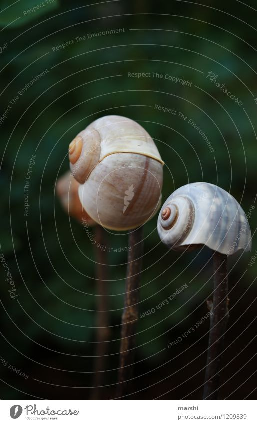 Garden impression VII Nature Plant Animal Snail Moody Snail shell Decoration Colour photo Exterior shot Close-up Detail Macro (Extreme close-up) Day