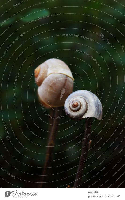Nature Plant Summer Animal Spring Garden Moody Park Decoration Snail Snail shell