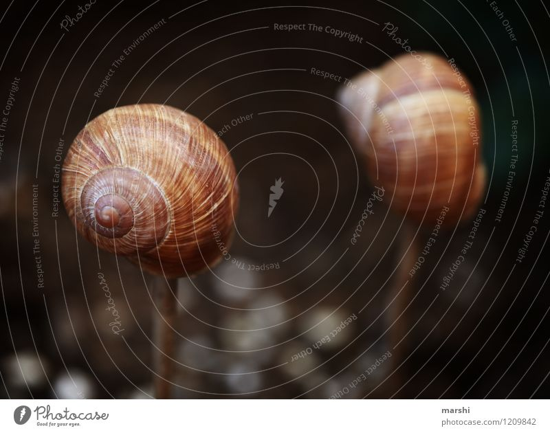 Nature Plant Animal Garden Brown Moody Park Decoration Snail Snail shell