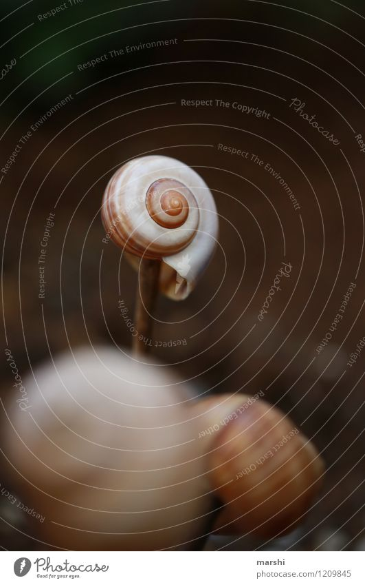 Garden impression II Nature Plant Summer Meadow Animal Snail Moody Snail shell Decoration Colour photo Exterior shot Close-up Detail Macro (Extreme close-up)