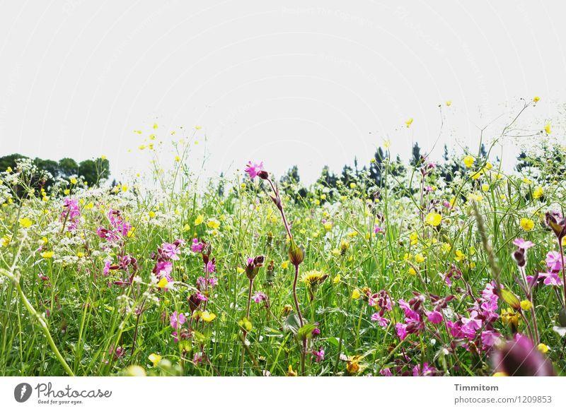 Nature Vacation & Travel Plant Green Landscape Environment Yellow Blossom Emotions Meadow Natural Esthetic Joie de vivre (Vitality) Beautiful weather Violet