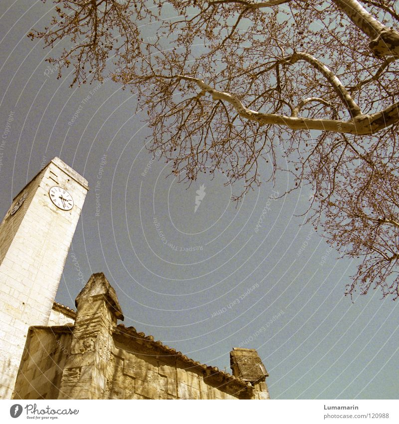 Sky Old Tree Stone Religion and faith Wait Time Walking Clock Tower Transience Branch Manmade structures Historic Year Past