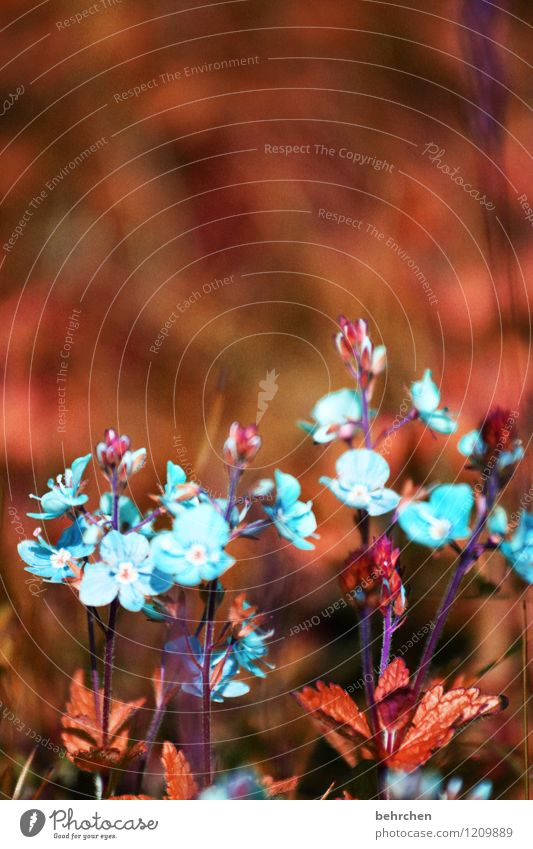 Nature Plant Blue Beautiful Summer Flower Leaf Blossom Spring Meadow Grass Small Garden Brown Park Growth
