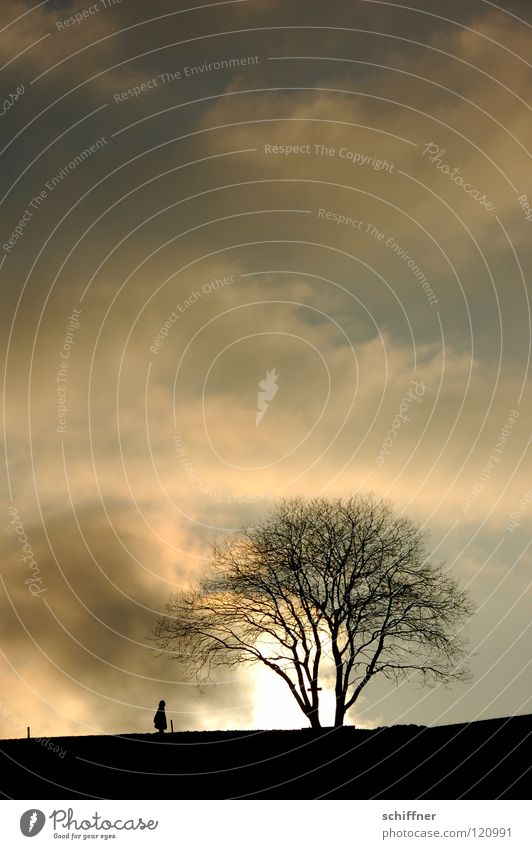 cloud walk Clouds Silhouette Tree Fence To go for a walk Going Evening Twilight Sunset Winter Cold Loneliness Natural phenomenon Black Forest Awareness Sky Pole