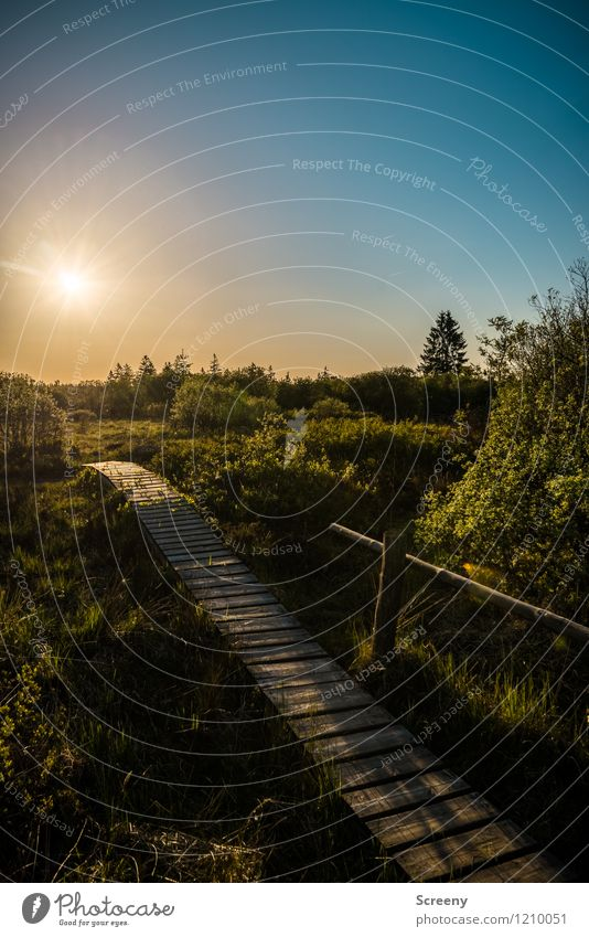 Light will guide me... Vacation & Travel Tourism Trip Hiking Nature Landscape Plant Sky Cloudless sky Sun Sunrise Sunset Sunlight Spring Summer
