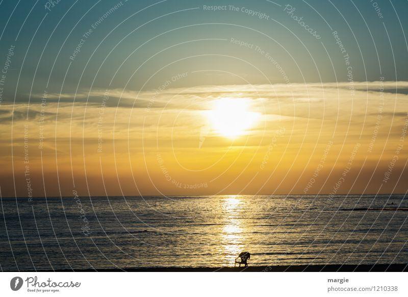 Sky Vacation & Travel Summer Water Sun Relaxation Ocean Landscape Calm Far-off places Beach Environment Yellow Freedom Horizon Air