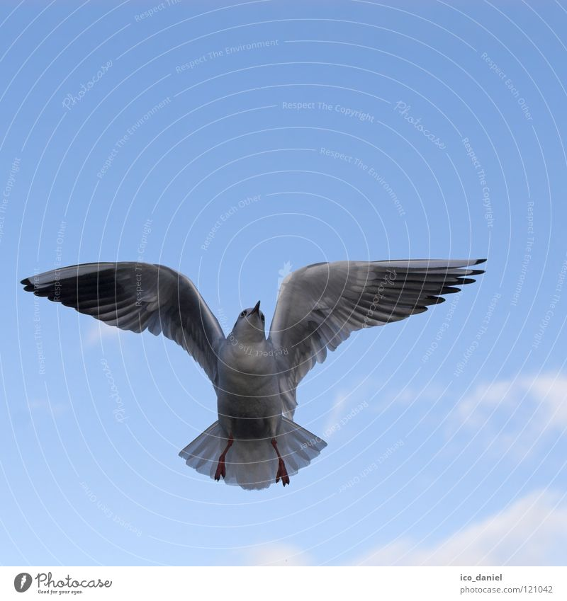 flying animal Seagull White Isar Ocean Air Clouds Span Bird Animal Glide Glider flight Beak Vociferous Flying Sky Free Wing Blue waterfowl River Aviation