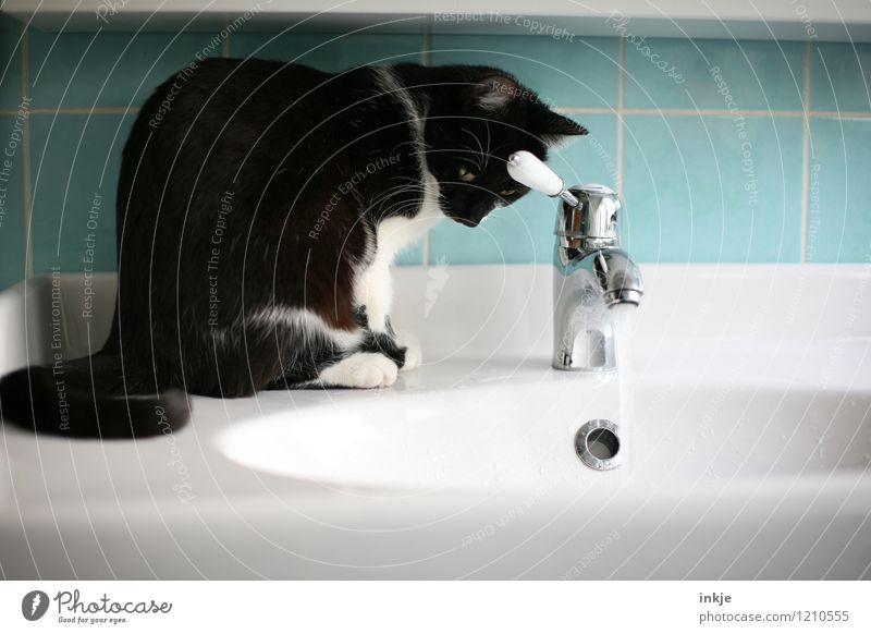 Cat life - sitting out Living or residing Bathroom Pet 1 Animal Jet of water Tap Sink Vanity Water Observe Crouch Looking Wet Curiosity Black Turquoise White