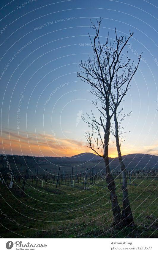 Sky Nature Blue Plant Sun Tree Landscape Black Environment Spring Meadow Grass Horizon Weather Field Air