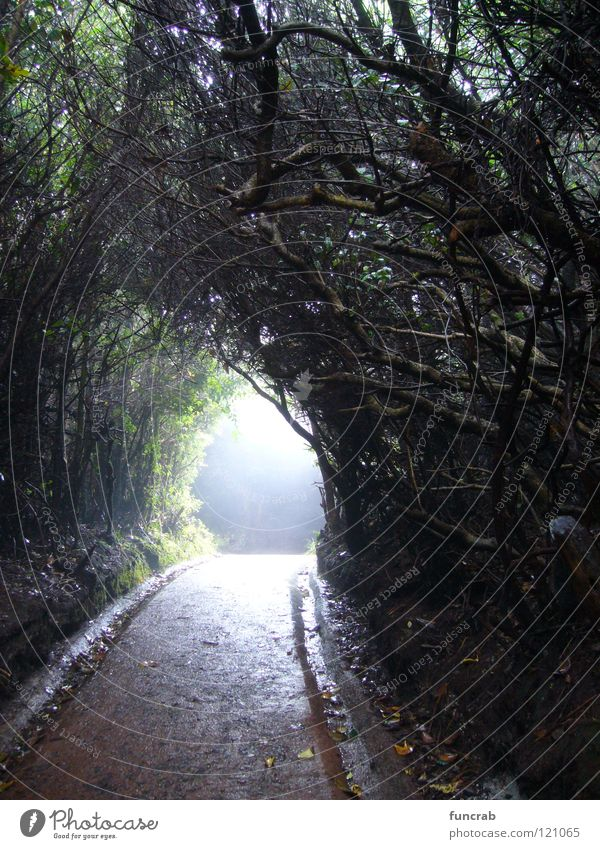 spooky path Costa Rica Poas National Park Tunnel Fear Panic South America volcano light at the end bewitched cloud forest